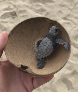 schildpadden loslaten in puerto escondido